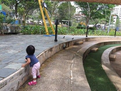 Anak bayi sibuk ngejar burung jalak
